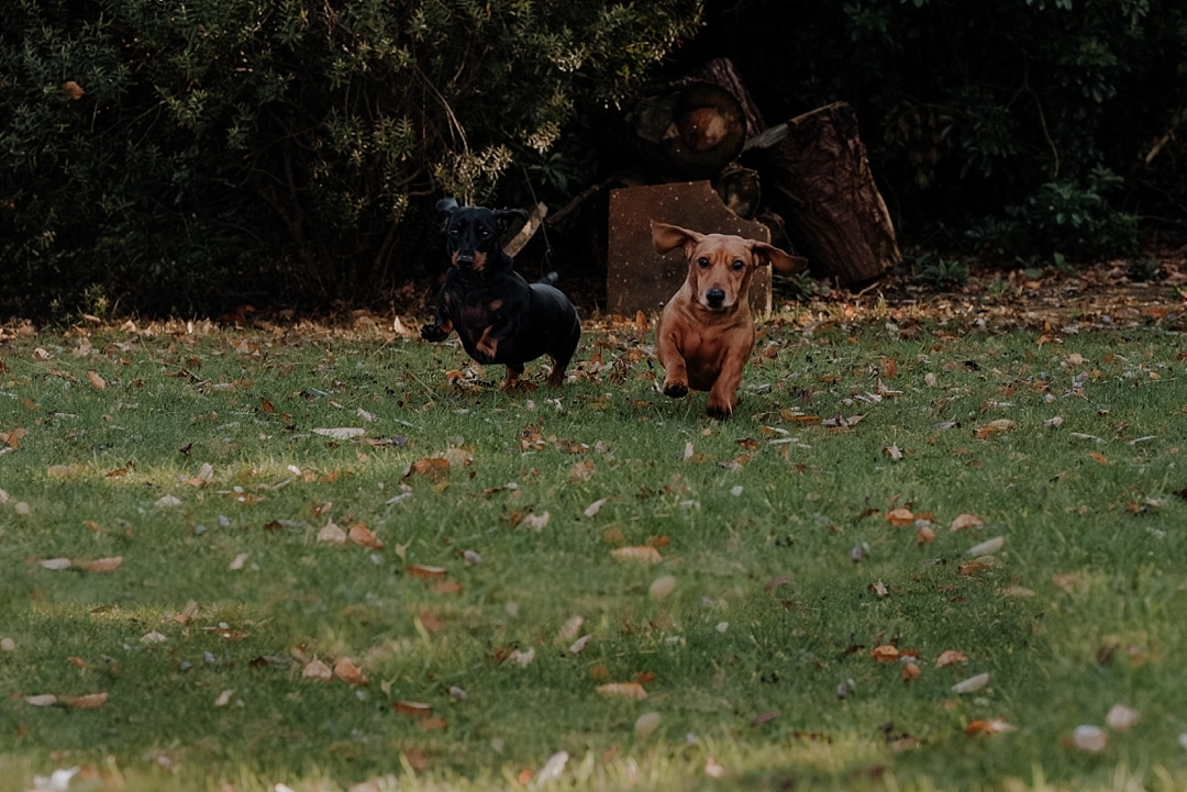 Sausage Dog photoshoot with Coventry photographer